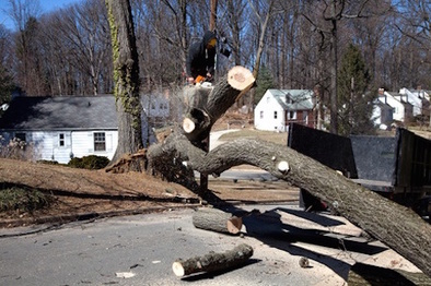 Top tree service scranton pa